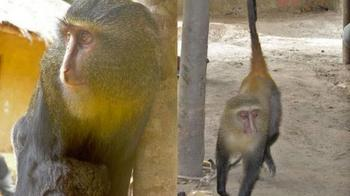 9.28 new monkey.jpg